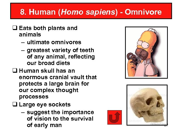 8. Human (Homo sapiens) - Omnivore q Eats both plants and animals – ultimate