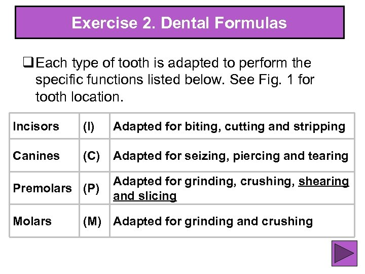 Exercise 2. Dental Formulas q Each type of tooth is adapted to perform the