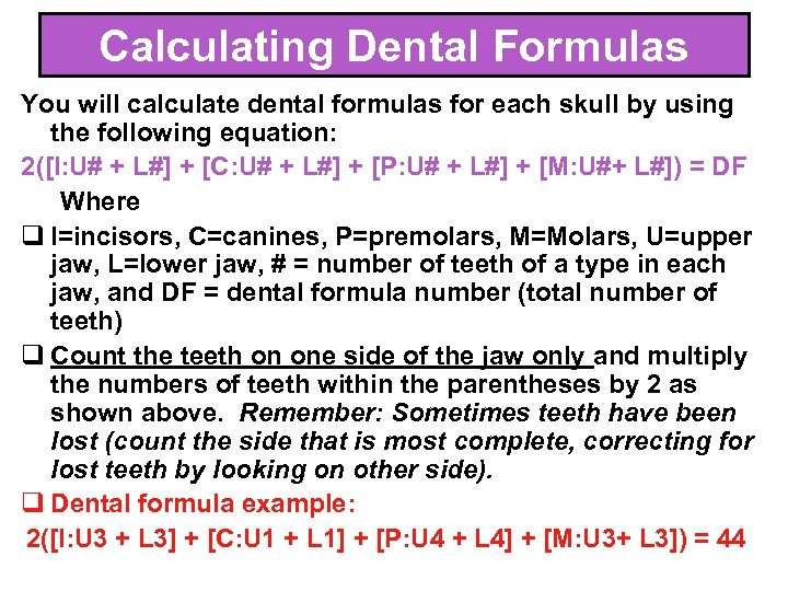 Calculating Dental Formulas You will calculate dental formulas for each skull by using the