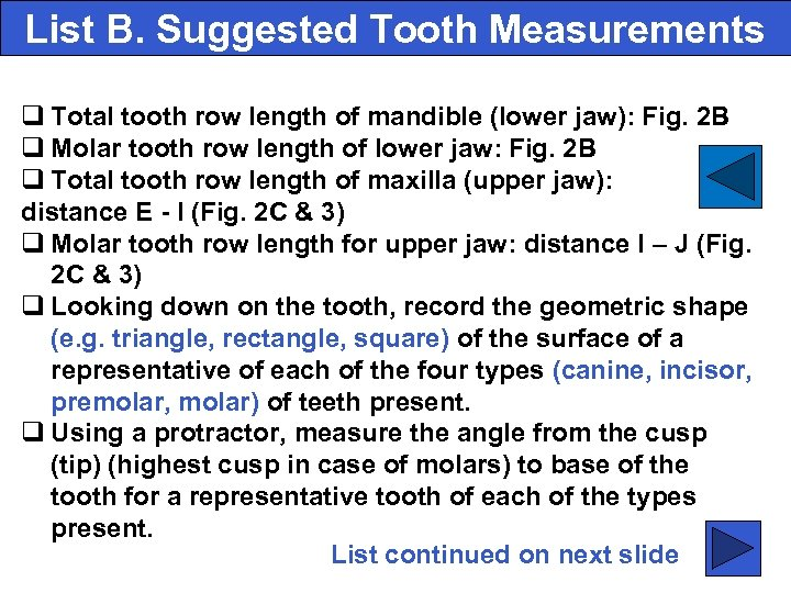 List B. Suggested Tooth Measurements q Total tooth row length of mandible (lower jaw):