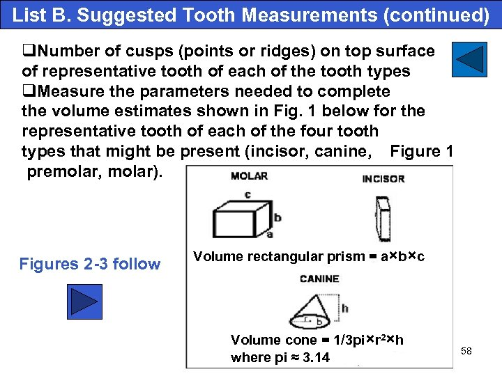 List B. Suggested Tooth Measurements (continued) q. Number of cusps (points or ridges) on