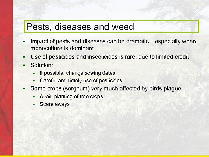 Pests, diseases and weed Impact of pests and diseases can be dramatic – especially