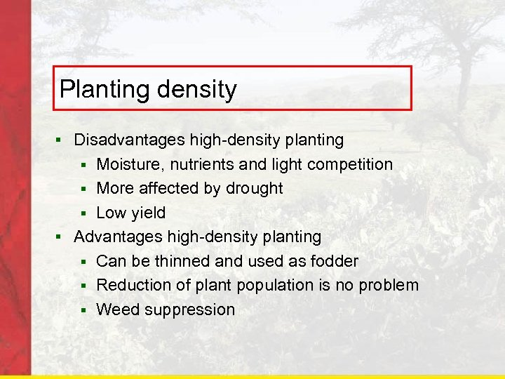 Planting density § Disadvantages high-density planting Moisture, nutrients and light competition § More affected