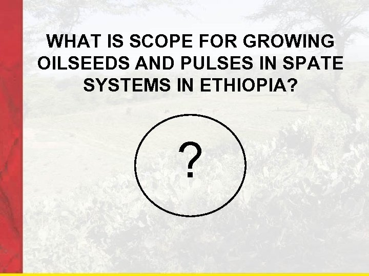 WHAT IS SCOPE FOR GROWING OILSEEDS AND PULSES IN SPATE SYSTEMS IN ETHIOPIA? ?