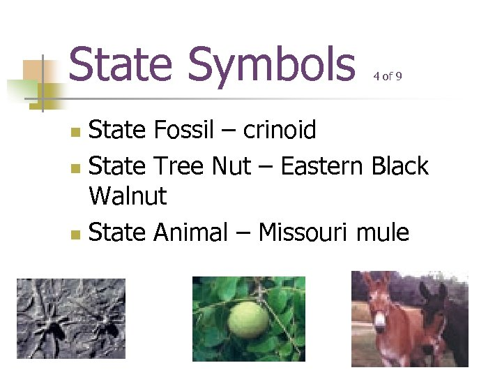 State Symbols 4 of 9 State Fossil – crinoid n State Tree Nut –