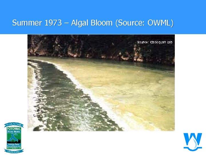 Summer 1973 – Algal Bloom (Source: OWML)