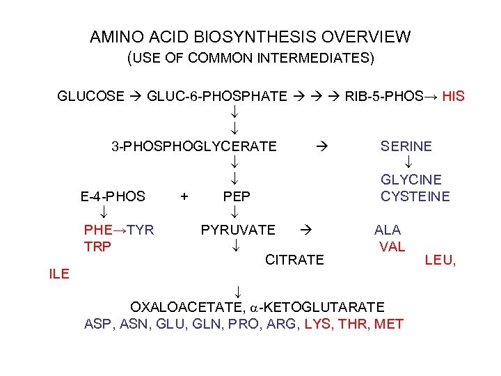AMINO ACID BIOSYNTHESIS OVERVIEW (USE OF COMMON INTERMEDIATES) GLUCOSE GLUC-6 -PHOSPHATE RIB-5 -PHOS→ HIS