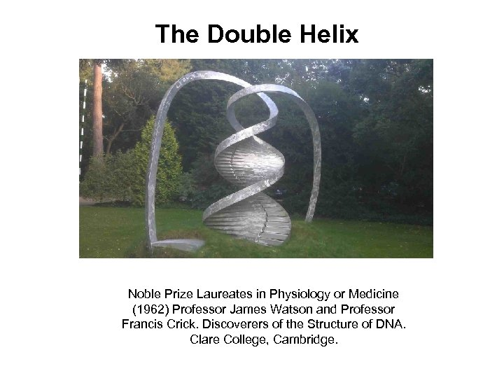 The Double Helix Noble Prize Laureates in Physiology or Medicine (1962) Professor James Watson