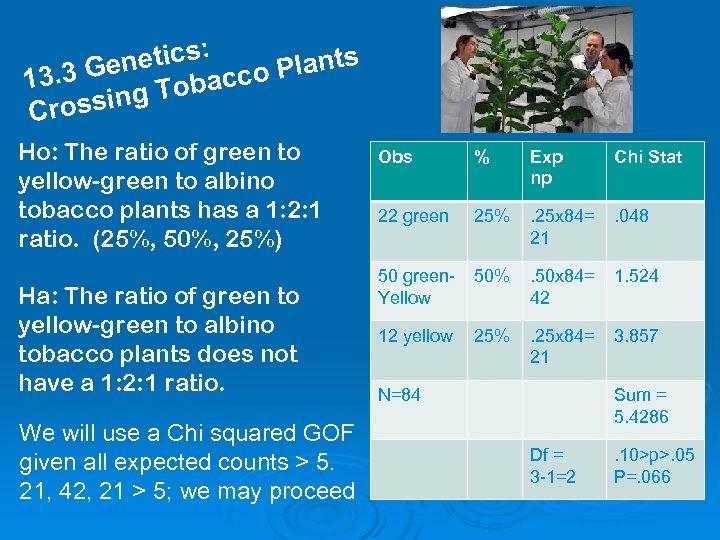 : netics co Plants 3. 3 Ge Tobac 1 g rossin C Ho: The