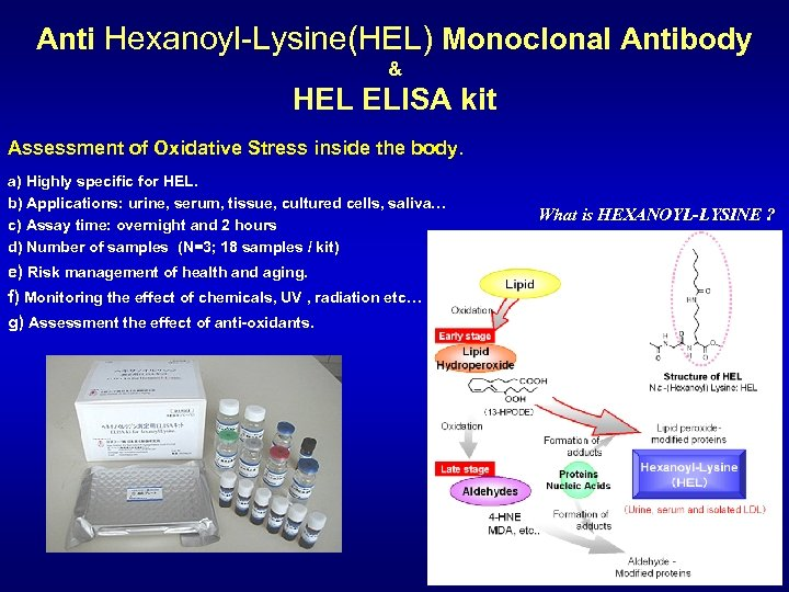Anti Hexanoyl-Lysine(HEL) Monoclonal Antibody & HEL ELISA kit Assessment of Oxidative Stress inside the