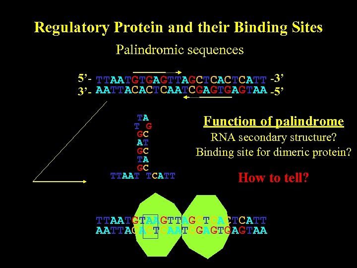 Regulatory Protein and their Binding Sites Palindromic sequences 5'- TTAATGTGAGTTAGCTCATT -3' 3'- AATTACACTCAATCGAGTAA -5'