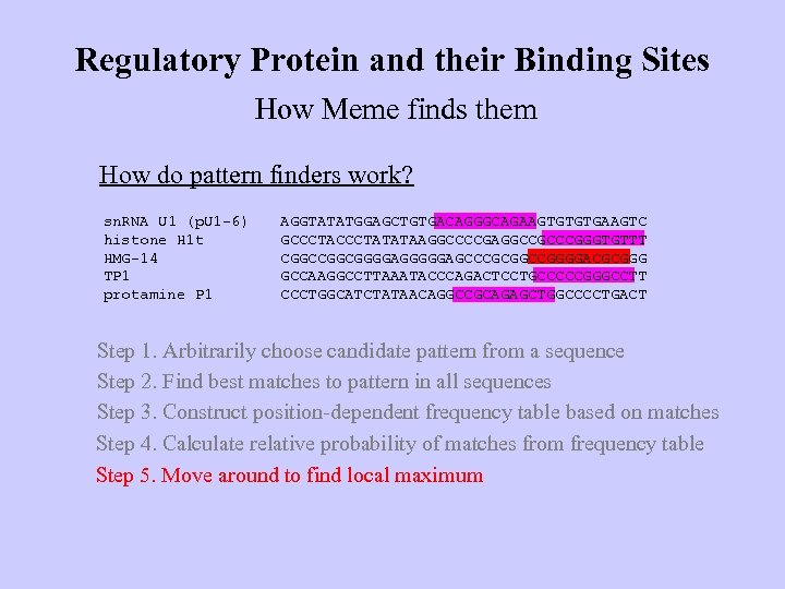 Regulatory Protein and their Binding Sites How Meme finds them How do pattern finders