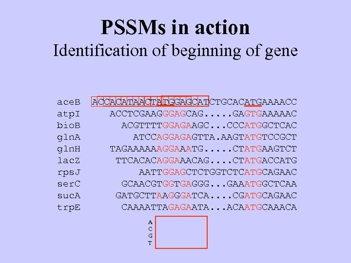 PSSMs in action Identification of beginning of gene ace. B atp. I bio. B
