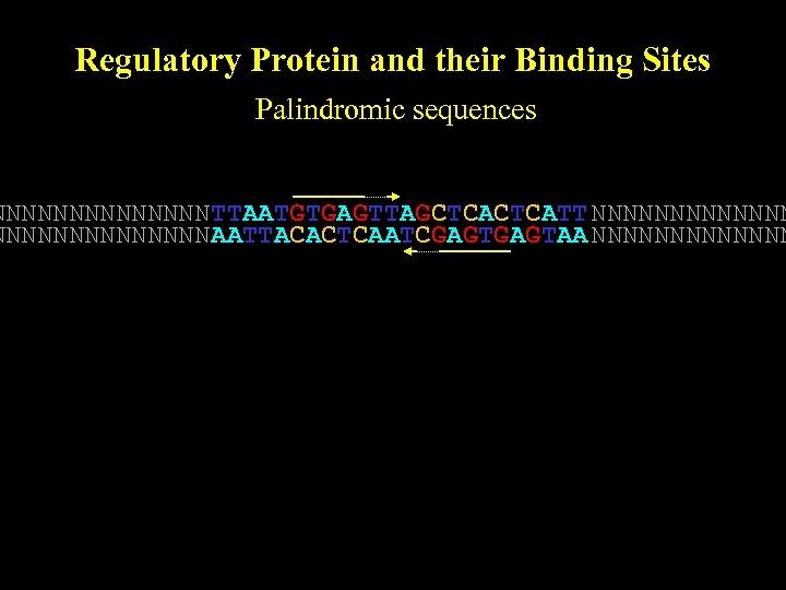 Regulatory Protein and their Binding Sites Palindromic sequences NNNNNNN TTAATGTGAGTTAGCTCATT NNNNNNNNNNNNNN AATTACACTCAATCGAGTAA NNNNNNN