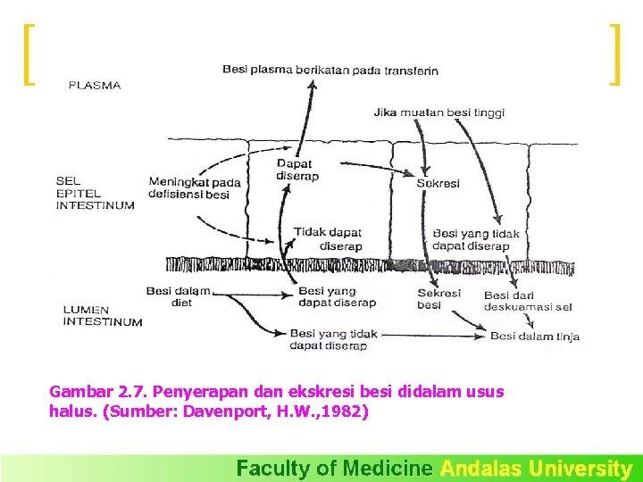 Gambar 2. 7. Penyerapan dan ekskresi besi didalam usus halus. (Sumber: Davenport, H. W.