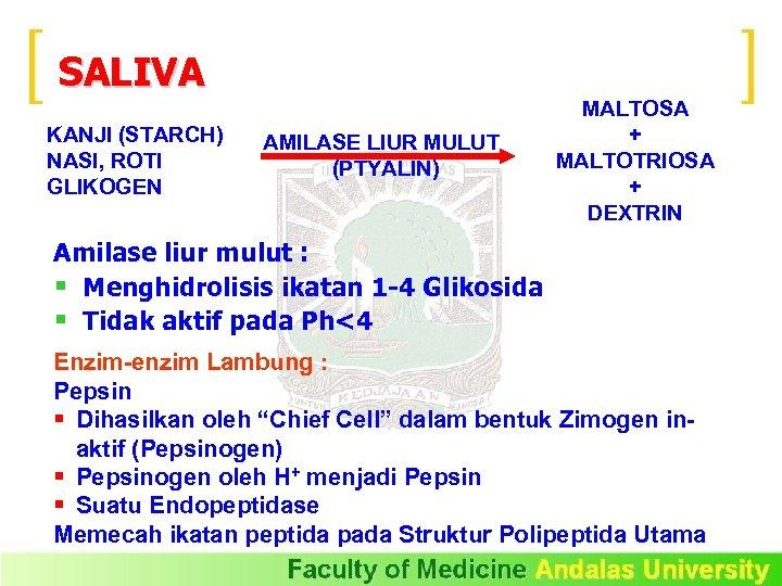 SALIVA KANJI (STARCH) NASI, ROTI GLIKOGEN AMILASE LIUR MULUT (PTYALIN) MALTOSA + MALTOTRIOSA +