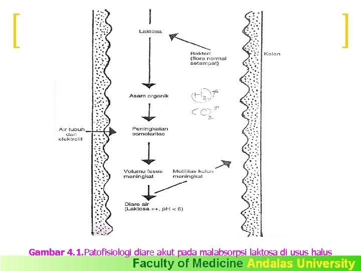Gambar 4. 1. Patofisiologi diare akut pada malabsorpsi laktosa di usus halus