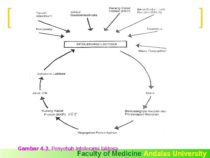 Gambar 4. 2. Penyebab intoleransi laktosa