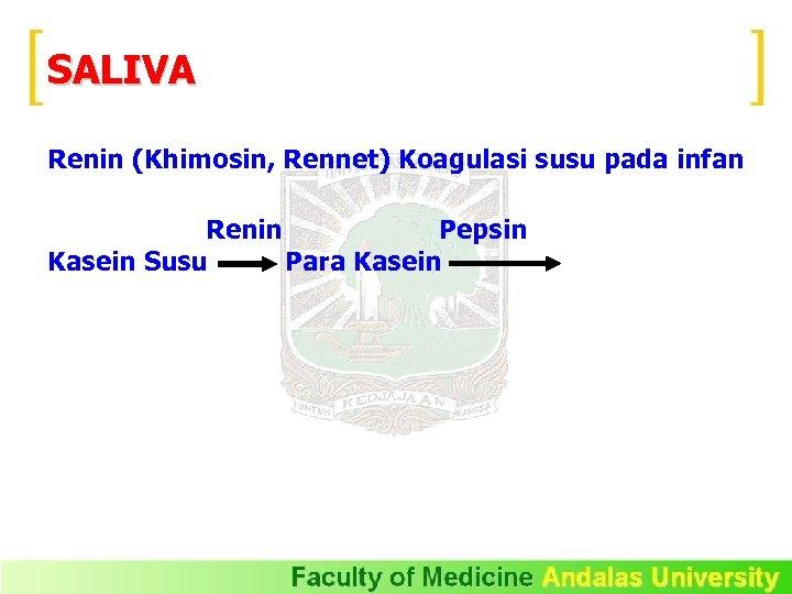 SALIVA Renin (Khimosin, Rennet) Koagulasi susu pada infan Renin Pepsin Kasein Susu Para Kasein