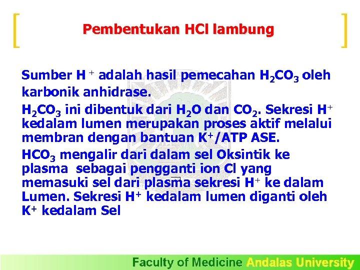 Pembentukan HCl lambung Sumber H + adalah hasil pemecahan H 2 CO 3 oleh