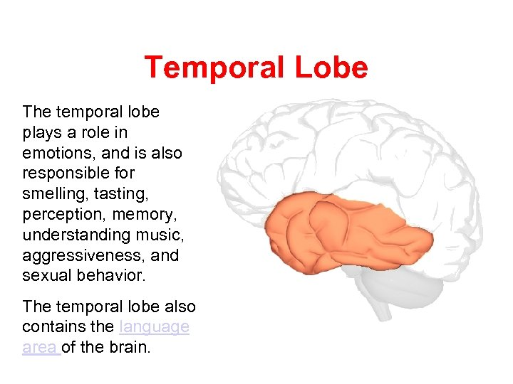 Temporal Lobe The temporal lobe plays a role in emotions, and is also responsible