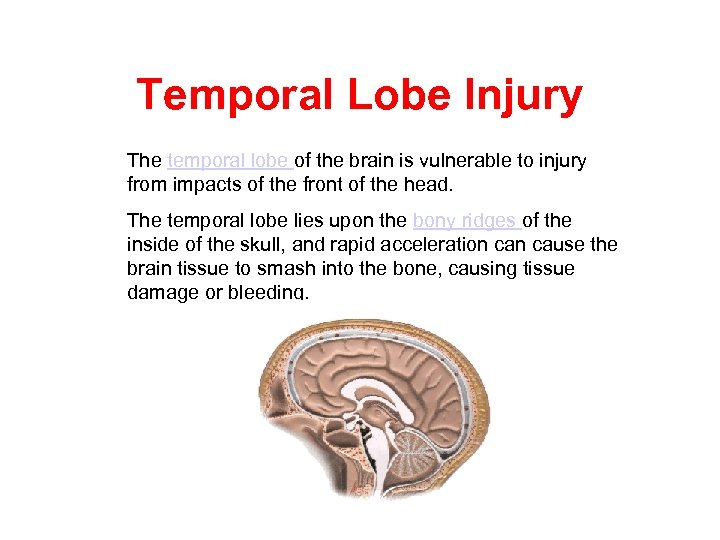 Temporal Lobe Injury The temporal lobe of the brain is vulnerable to injury from