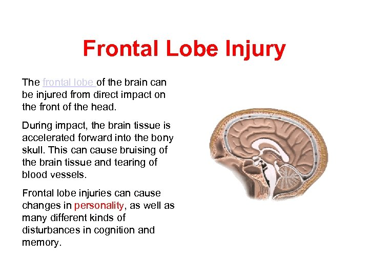 Frontal Lobe Injury The frontal lobe of the brain can be injured from direct