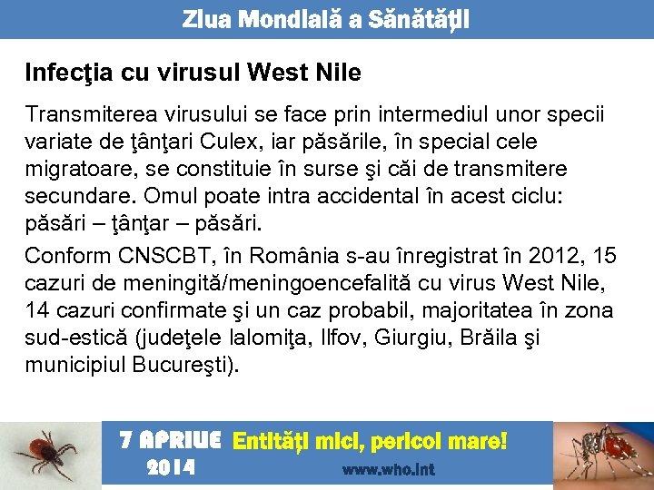 Ziua Mondială a Sănătăţii Infecţia cu virusul West Nile Transmiterea virusului se face prin