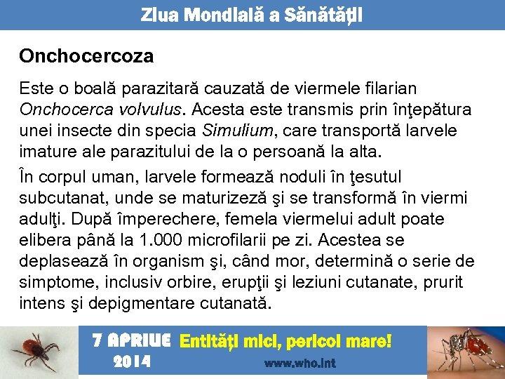 Ziua Mondială a Sănătăţii Onchocercoza Este o boală parazitară cauzată de viermele filarian Onchocerca