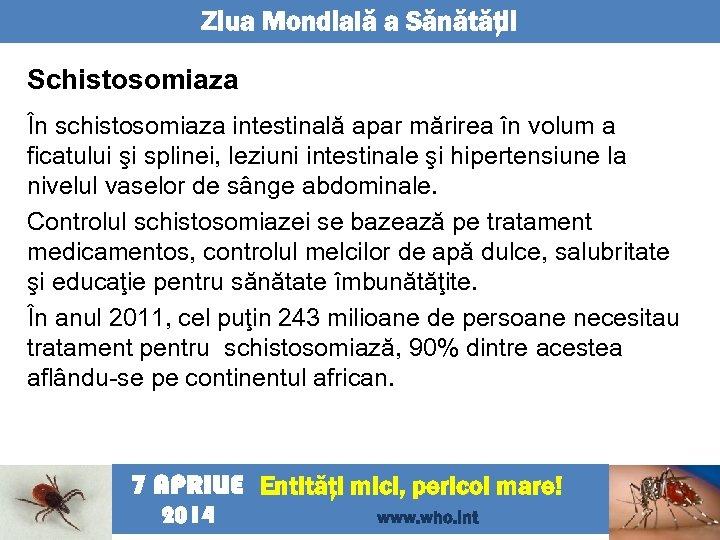 Ziua Mondială a Sănătăţii Schistosomiaza În schistosomiaza intestinală apar mărirea în volum a ficatului