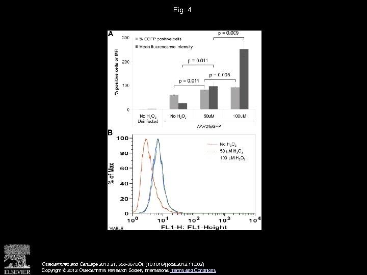 Fig. 4 Osteoarthritis and Cartilage 2013 21, 358 -367 DOI: (10. 1016/j. joca. 2012.
