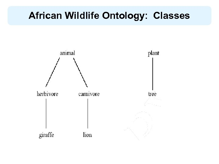 African Wildlife Ontology: Classes