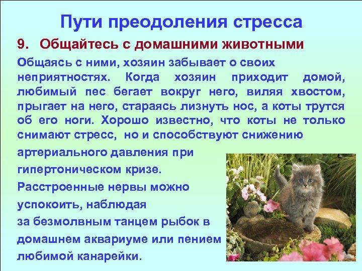 Пути преодоления стресса 9. Общайтесь с домашними животными Общаясь с ними, хозяин забывает о