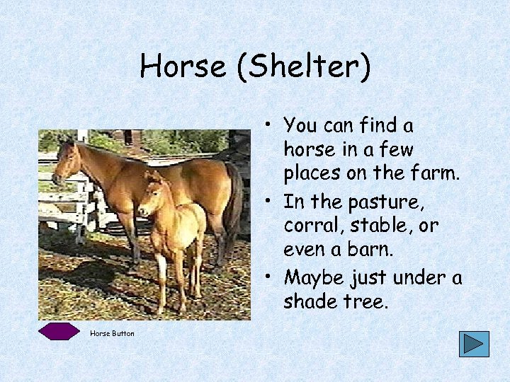 Horse (Shelter) • You can find a horse in a few places on the