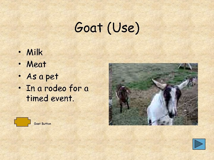 Goat (Use) • • Milk Meat As a pet In a rodeo for a