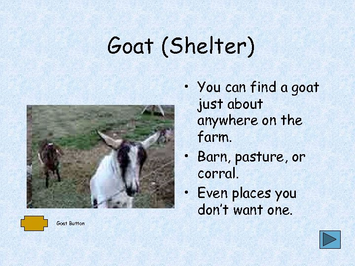 Goat (Shelter) • You can find a goat just about anywhere on the farm.