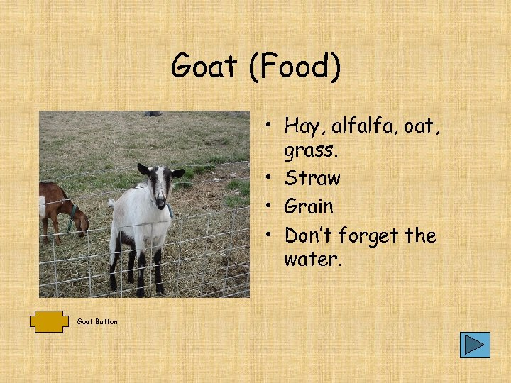 Goat (Food) • Hay, alfalfa, oat, grass. • Straw • Grain • Don't forget