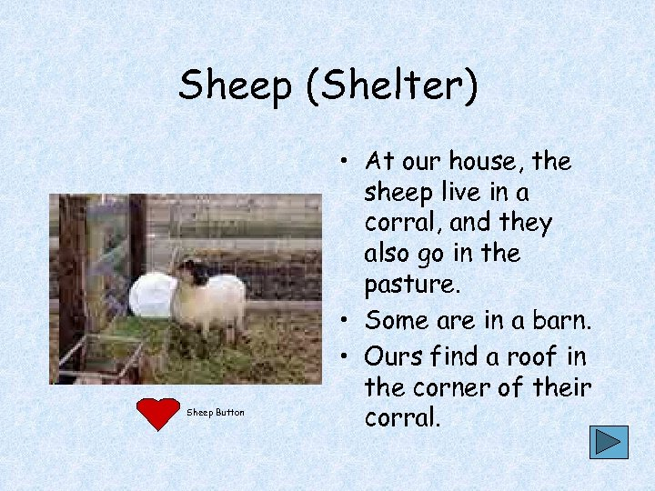 Sheep (Shelter) Sheep Button • At our house, the sheep live in a corral,