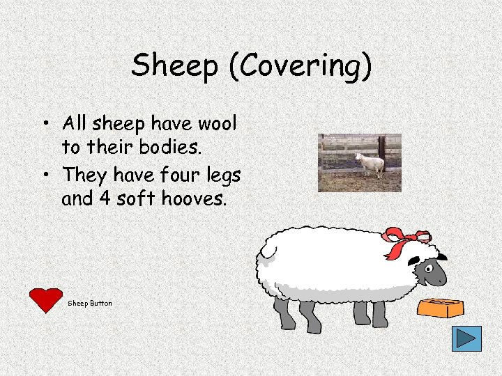 Sheep (Covering) • All sheep have wool to their bodies. • They have four