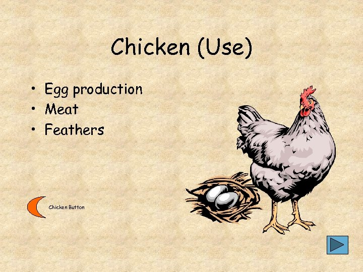 Chicken (Use) • Egg production • Meat • Feathers Chicken Button