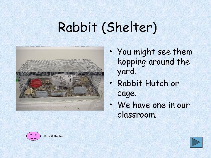 Rabbit (Shelter) • You might see them hopping around the yard. • Rabbit Hutch