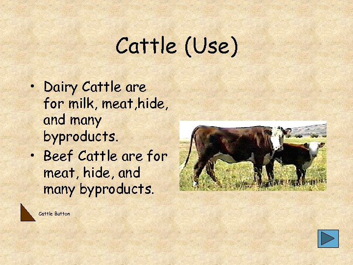 Cattle (Use) • Dairy Cattle are for milk, meat, hide, and many byproducts. •