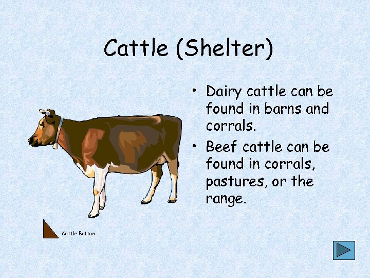 Cattle (Shelter) • Dairy cattle can be found in barns and corrals. • Beef