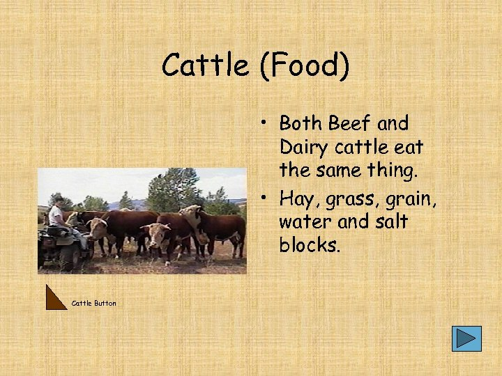 Cattle (Food) • Both Beef and Dairy cattle eat the same thing. • Hay,