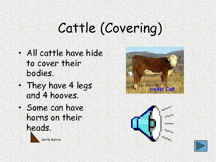 Cattle (Covering) • All cattle have hide to cover their bodies. • They have