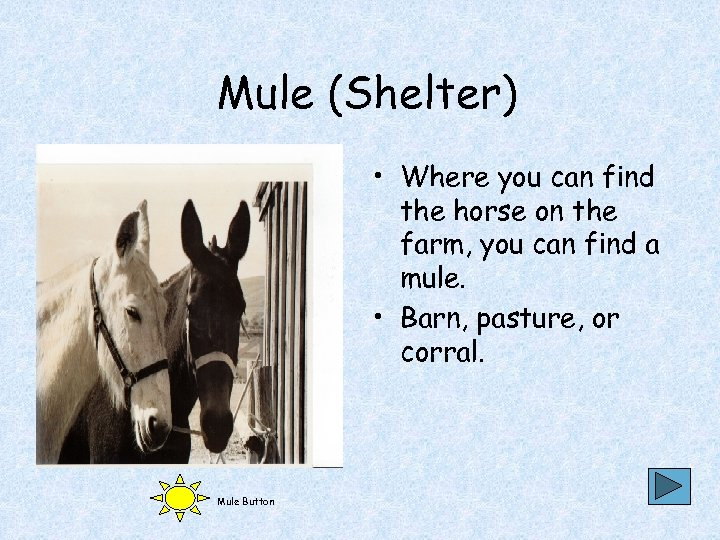 Mule (Shelter) • Where you can find the horse on the farm, you can