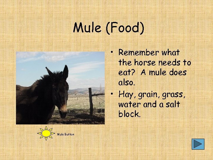 Mule (Food) • Remember what the horse needs to eat? A mule does also.