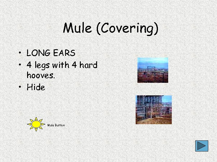 Mule (Covering) • LONG EARS • 4 legs with 4 hard hooves. • Hide
