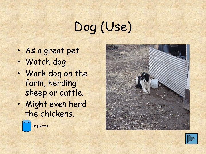 Dog (Use) • As a great pet • Watch dog • Work dog on