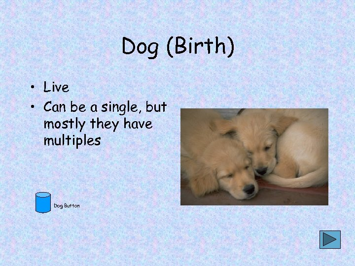 Dog (Birth) • Live • Can be a single, but mostly they have multiples